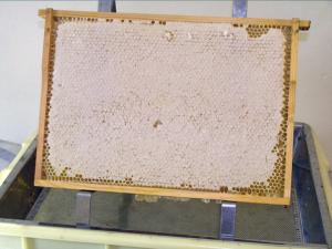 En fyldt honningtavle.