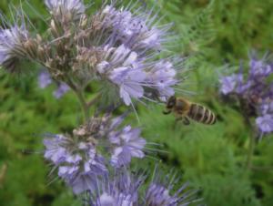 biodiversiteten