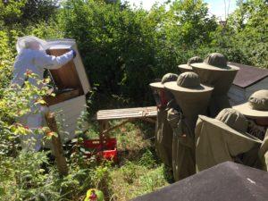Undervisning om biavl