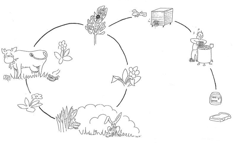 Bierne i naturens kredløb