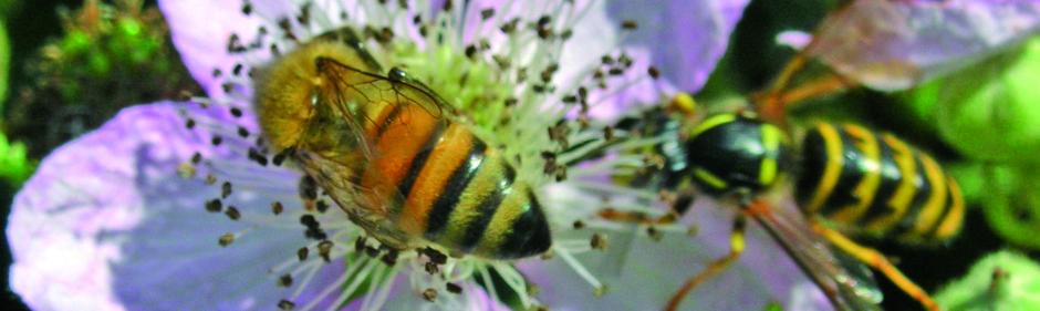 bi eller hveps